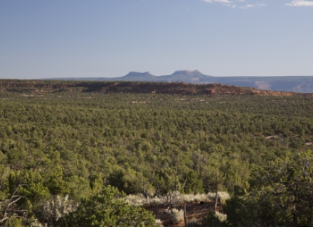Photo of the Bears Ears by Bob Wick courtesy of the Bureau of Land Management