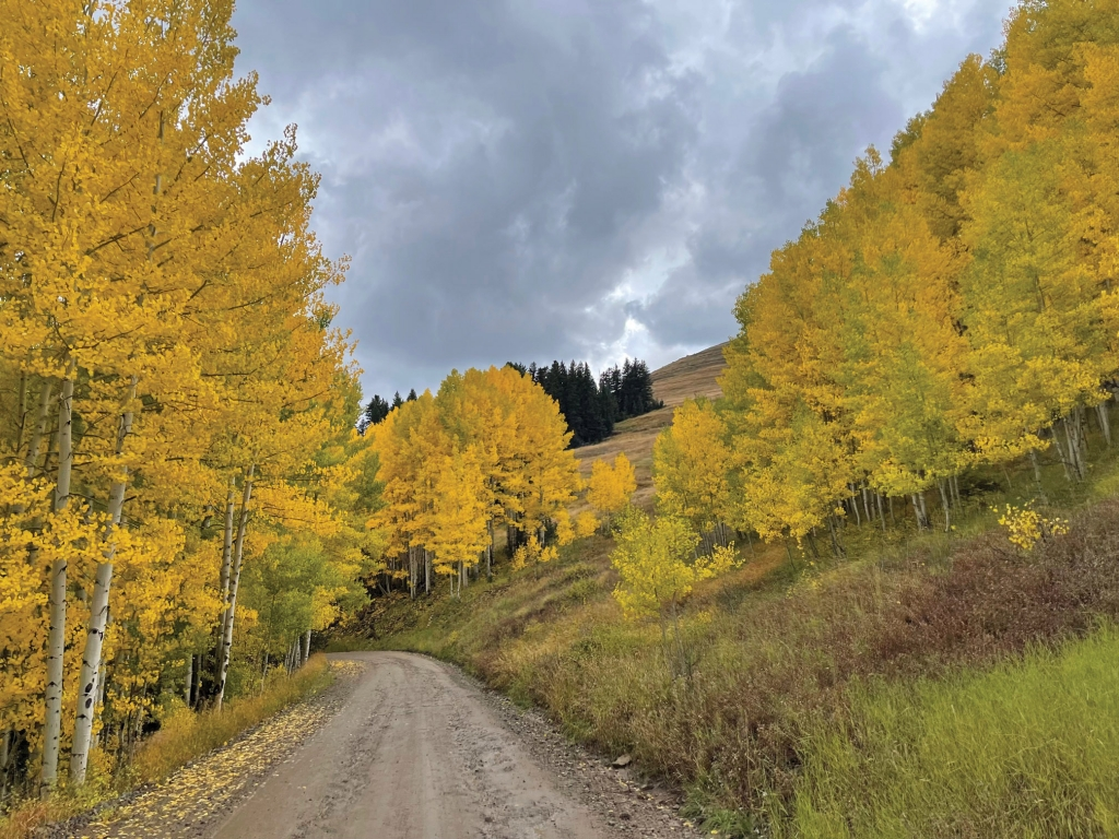 Spectacular fall photos in the Abajo Mountains. Staci Hoggard photo