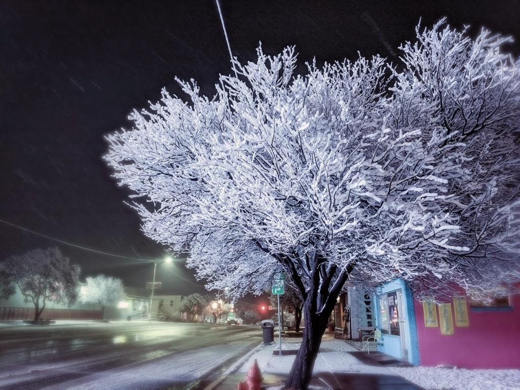 A normal tree posing as a Christmas tree in Blanding. Desteny Hatch-Bingham photo