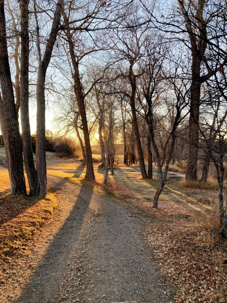 The sun sets through bare trees at the Hideout Golf Course in Monticello.  Haley Burton photo
