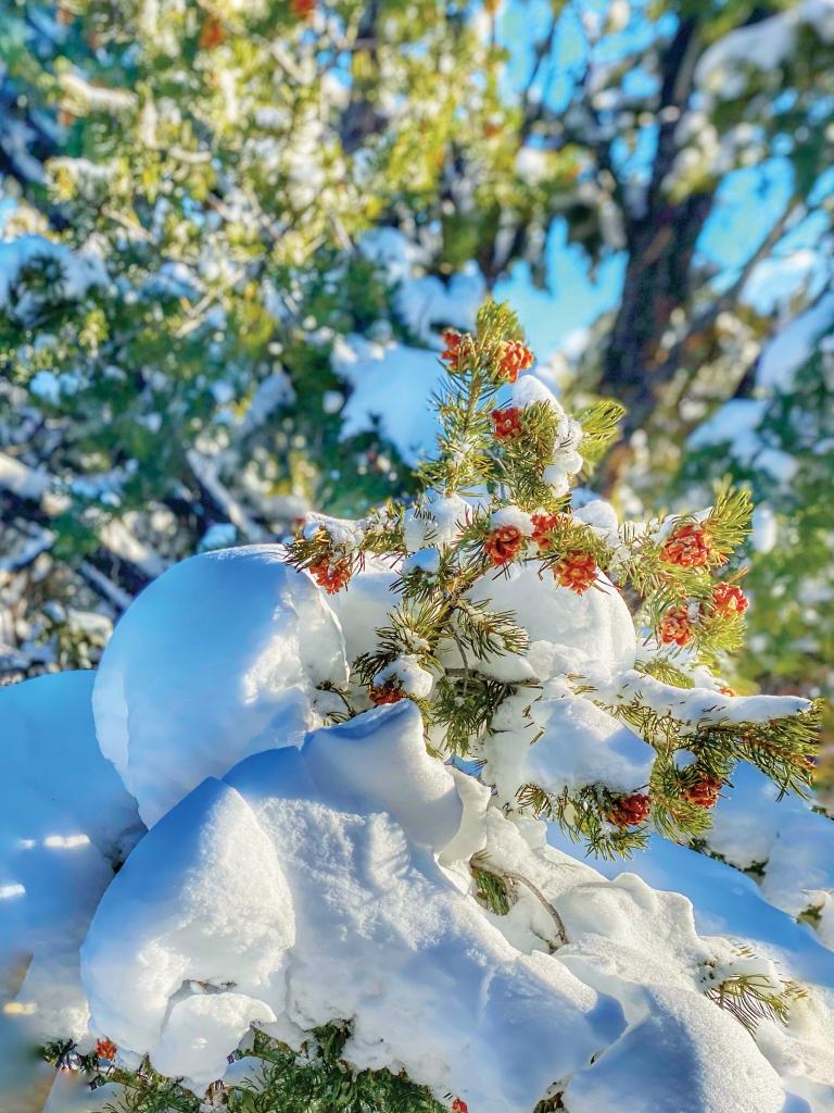 A beautiful winter scene after a San Juan County snowfall.  Karly Halls photo