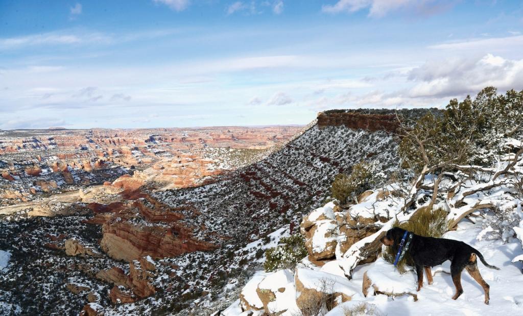 Exploring the canyon rims with my hounds.  Dan Davidson photo