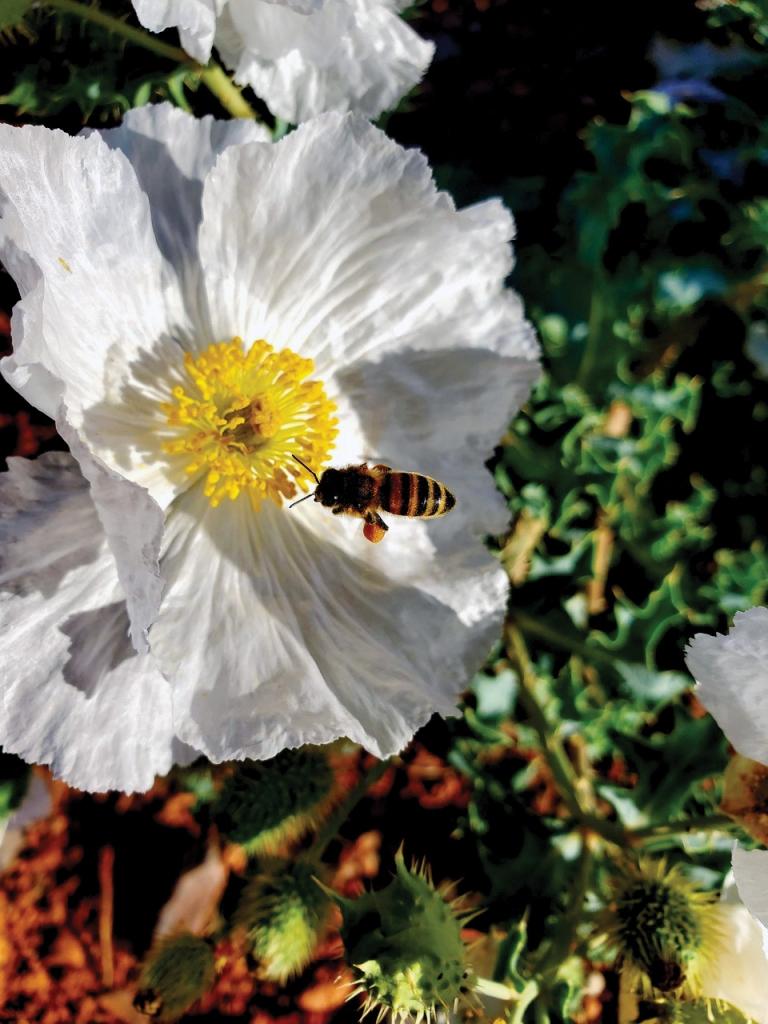 Busy bees.  Latoya Holliday Tsinigine photo