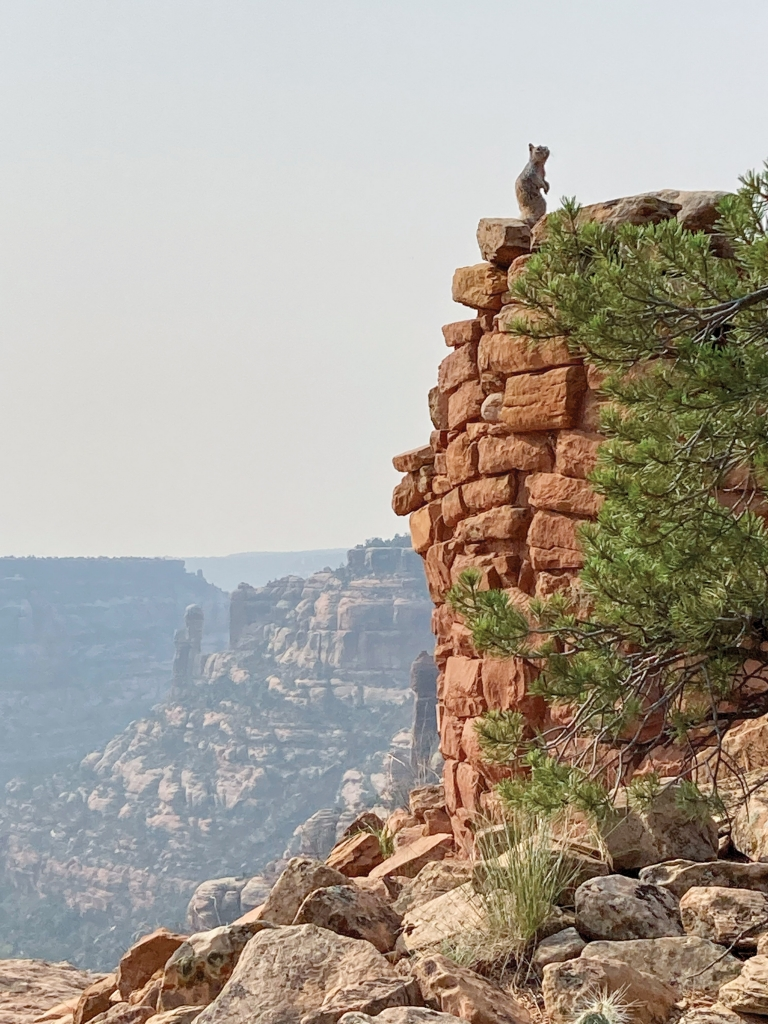 This little guy enjoys the amazing view from Cedar Mesa.  Louis Williams photo